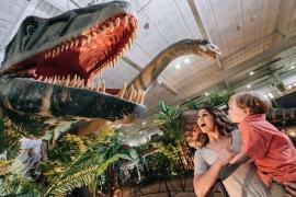 Dinosaur Exhibition.