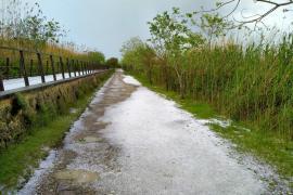 In October 2001, S'Albufereta was declared a nature reserve