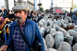 Shepherds guided their flocks through the heart of the Spanish capital.