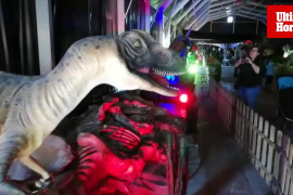 Dinosaurs Tour is now in Palma and here until next month