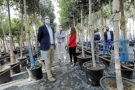 José Hila, mayor of Palma, Mallorca at the city's tree nursery